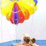 イージードッグフォトコンテスト「#イージー空中遊泳」結果発表