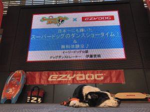 GWは愛犬とドッグダンスを体験!ドッグダンス体験会 5月3日(金・祝)に開催!