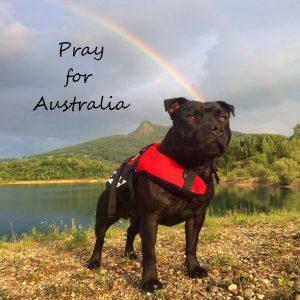売上の一部をオーストラリア赤十字に寄付させて頂きました